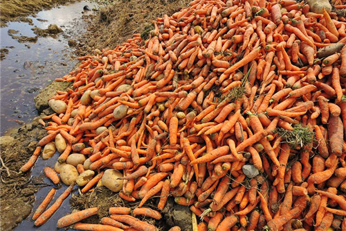 The huge problem of food waste could be twice as big as we thought